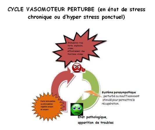 cycle vasomoteur perturbe